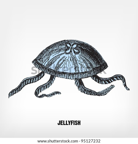 Vintage jellyfish illustration - photo#15