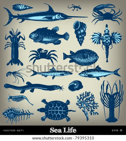 """Engraving vintage sea life set from """"The Complete encyclopedia of illustrations"""" containing the original illustrations of The iconographic encyclopedia of science, literature and art, 1851. Vector."""