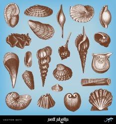 Engraving vintage Shells set from