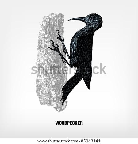 engraving vintage woodpecker...