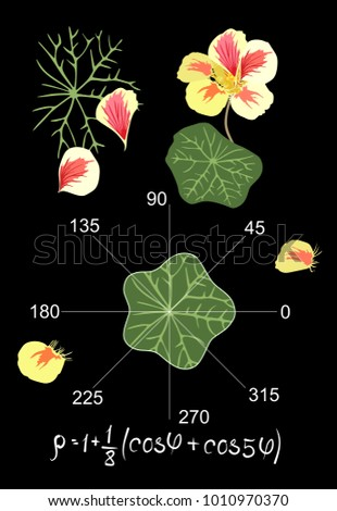 Entertaining mathematics.  Trigonometric equation and graph  describing the shape of a leaf of nasturtium. Beautiful card, teacher's manual. Vector illustration.