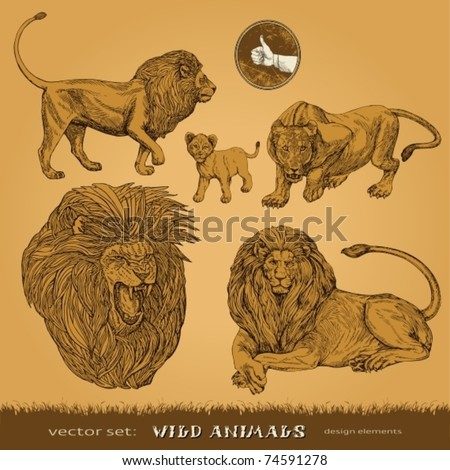 EPS10,  Hand-drawn wild animals vector set: lions, a lioness and lion cub (for decoration and design)