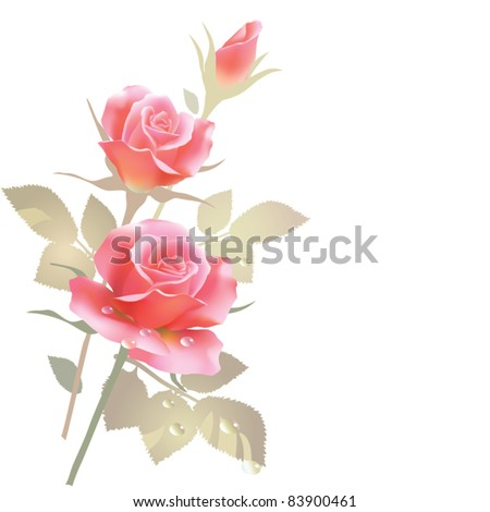 EPS10/ Three roses on a white background