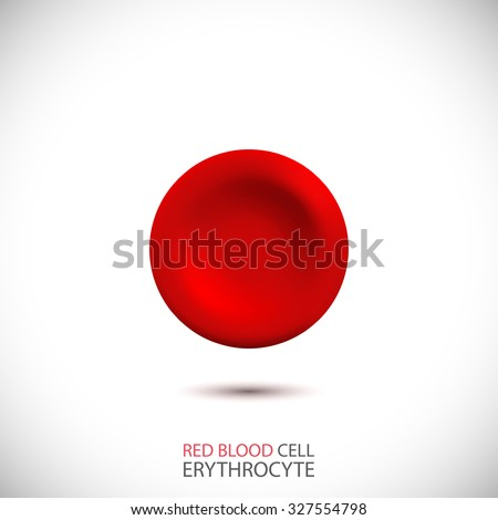 erythrocyte red blood cell
