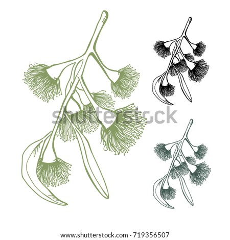 Eucalyptus Flowering Gumnut Set Mixed Colours on a White isolated background