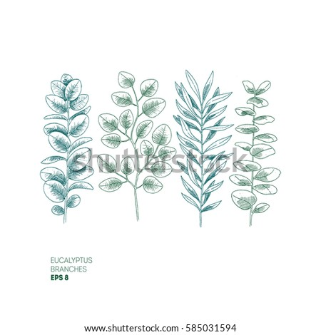 eucalyptus leaf collection