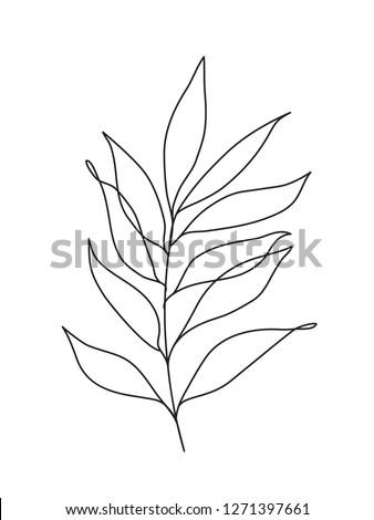 Eucalyptus leaves . One line drawing art