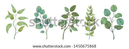 Eucalyptus plants. Rustic foliage branches and leaves for wedding invitation cards, decorative herbs collection. Vector botanical set trendy nature watercolour greenery leafs