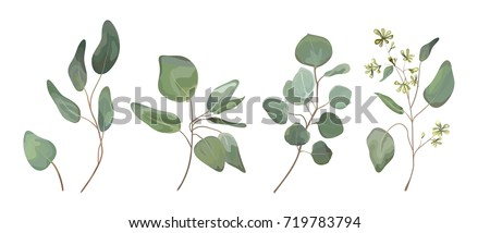 eucalyptus seeded silver dollar