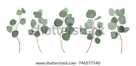 Eucalyptus silver dollar greenery, gum tree foliage natural leaves & branches designer art tropical elements set bundle hand drawn in watercolor style. Vector decorative beautiful elegant illustration