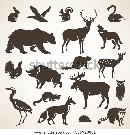 european forrest wild animals