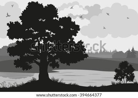 evening forest landscape  oak