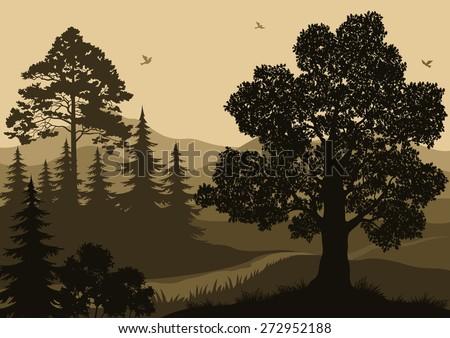 evening forest landscape  trees