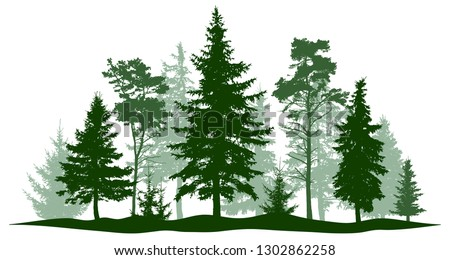 evergreen forest pine  tree
