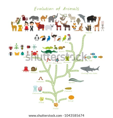 Evolution in biology, scheme evolution of animals isolated on white background. children's education, science. Evolution scale from unicellular organism to mammals. back to school. Vector illustration