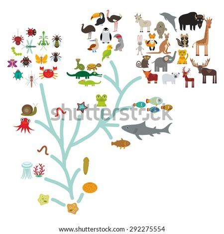 evolution in biology  scheme