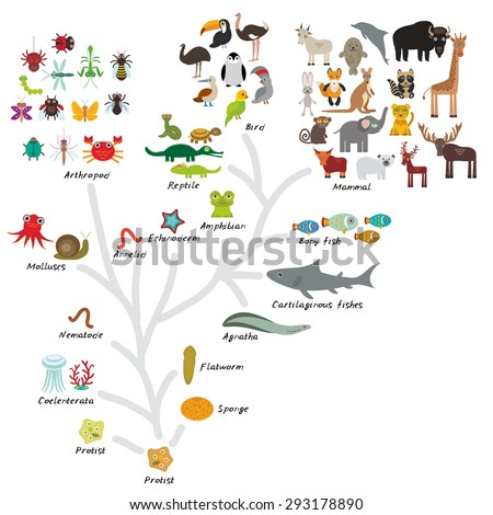 evolution in biology  scheme