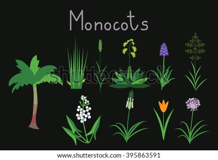 Vector / Free Vectors Download / 4Vector 10 Examples Of Monocot Plants