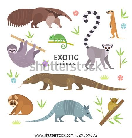 Exotic animals. Vector illustration with flat animals, including anteater, Ring-tailed lemur, lemur loris, sloth, Komodo monitor lizard, armadillo, meerkat, tarsier, isolated on white.
