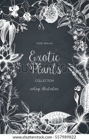 Exotic background with hand drawn plants sketch. Vector tropical flowers, leaves and fruits design. Vintage template with  botanical elements on chalkboard.