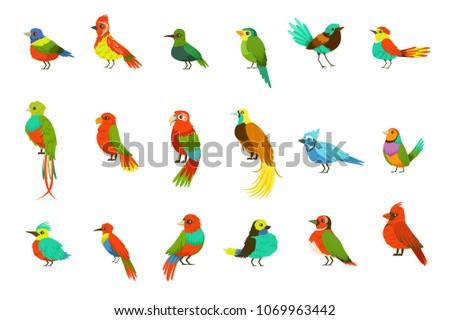 exotic birds from jungle rain