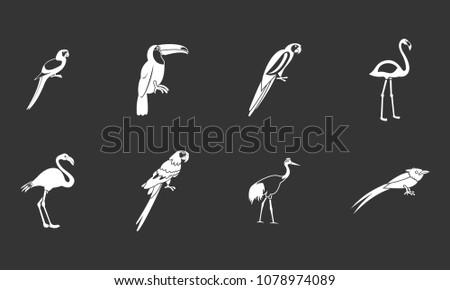 exotic birds icon set vector