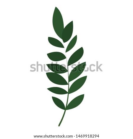 Exotic botany leaf icon. Cartoon of exotic botany leaf vector icon for web design isolated on white background