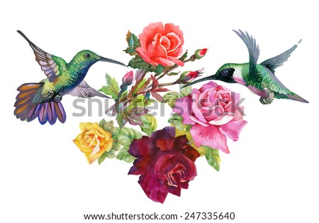 exotic colibri birds with rose