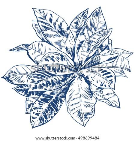 Exotic flowers set. Botanical vector vintage illustration. Design elements.