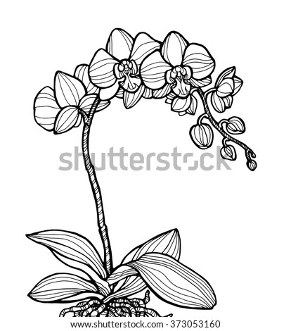 Exotic Orchid Flower, Forest Wild Plant. Vector Engraving Botany ...
