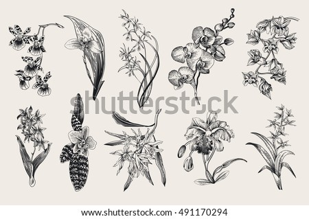 exotic orchid set botanical