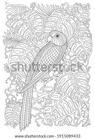exotic parrot bird  fairy tale