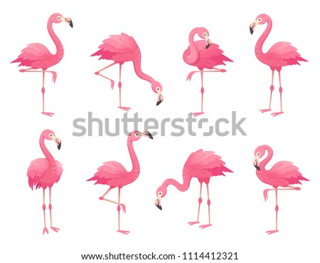 Exotic pink flamingos birds. Flamingo with rose feathers stand on one leg in wild african fauna. Zoo feather rosy plumage cute flam bird cartoon vector isolated set illustration