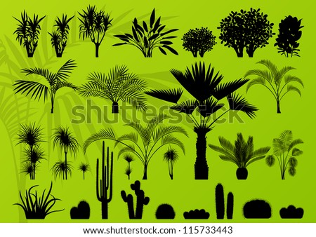 Exotic plant, bush, palm tree and cactus detailed illustration collection background vector