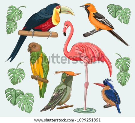 Exotic set birds