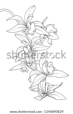 exotic tropical cattleya orchid