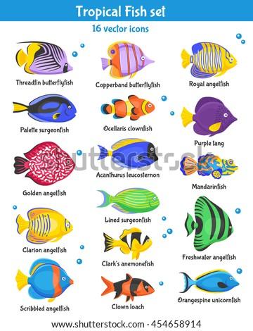 Download fish mandarinfish wallpaper 1680x1050 wallpoper for Pet fish names