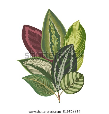 Exotic tropical leaves. Vintage botanical bouquet.