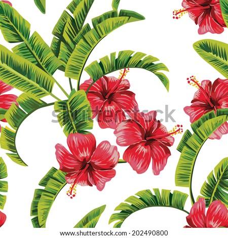 exotic tropical plants banana