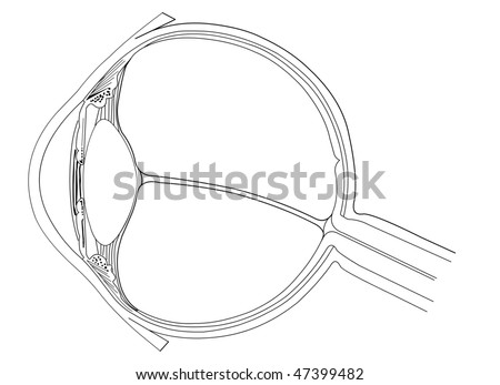 anatomy of eye. stock vector : Eye anatomy