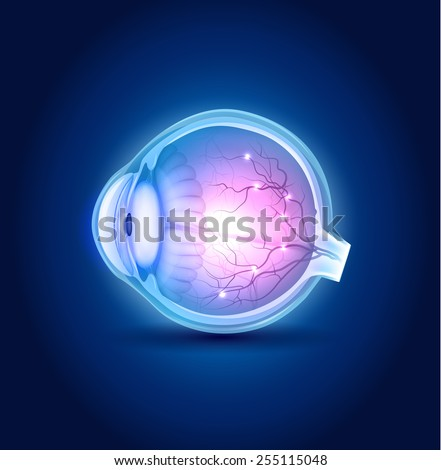 eye anatomy blue design