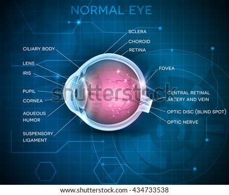 eye anatomy on a blue...
