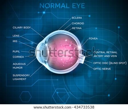 eye anatomy on a blue...