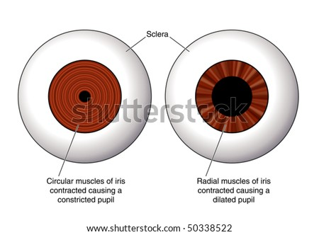 Eye contraction of the iris labeled stock vector illustration