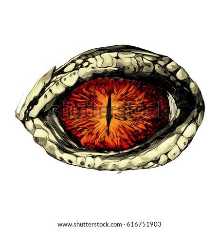 eye of a crocodile or reptile