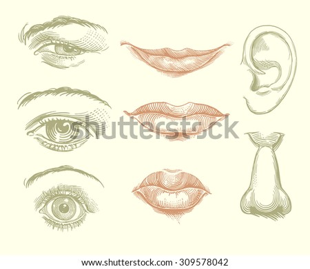 eyes  lips  nose  ear design
