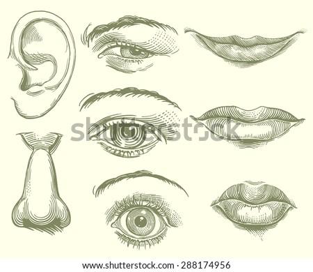 eyes  lips  nose  ear. hand...