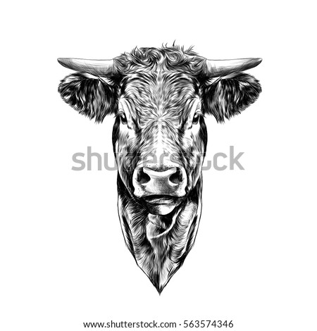 face cow sketch vector