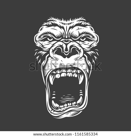 face of gorilla isolated on