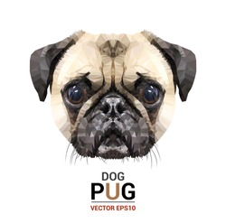 Face Pug  illustration of a dog.  triangle low polygon style.  the top view  on  white color background